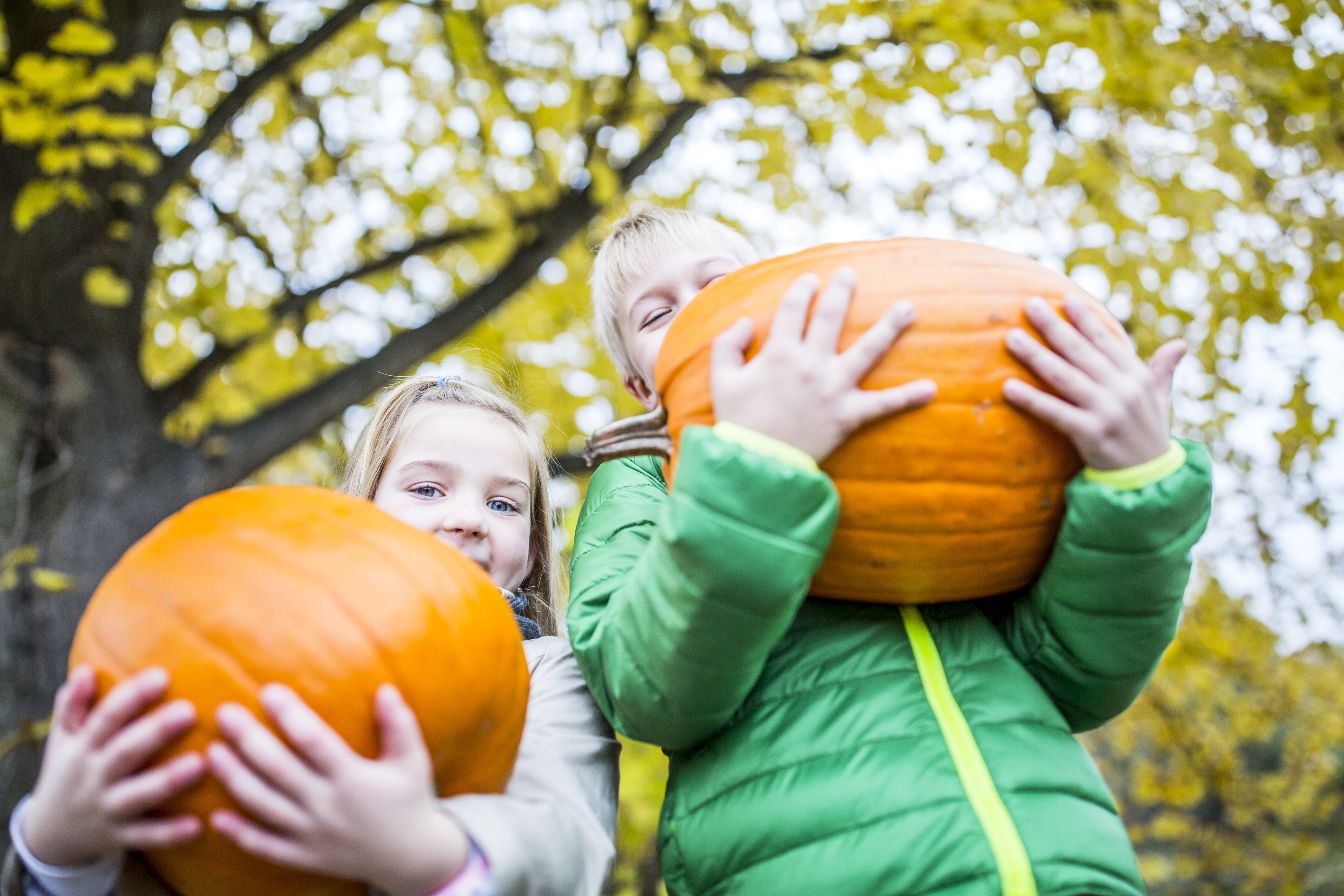 Fall Festivals Worth Driving For landscape